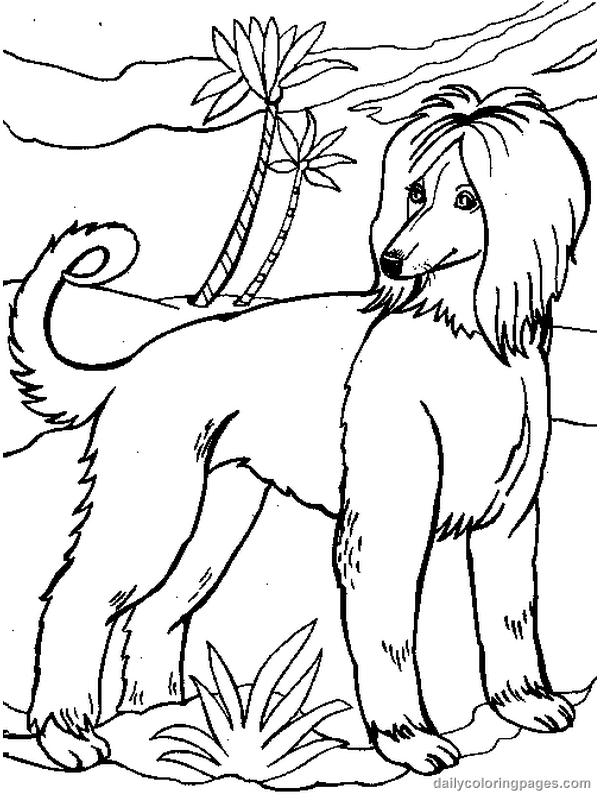Perro 50 Animales Páginas Para Colorear